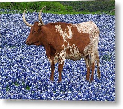 Da227 Tex And The Bluebonnets Daniel Adams Metal Print