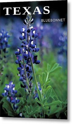 Metal Print featuring the mixed media Texas Bluebonnet State Flower by Daniel Hagerman
