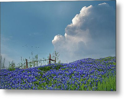 Metal Print featuring the photograph Texas Bluebonnets And Spring Showers by David and Carol Kelly