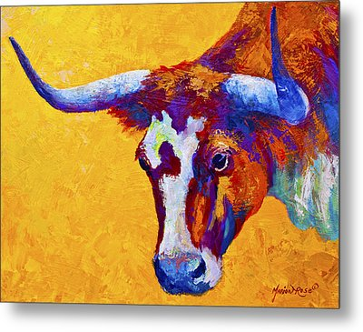 Texas Longhorn Cow Study Metal Print by Marion Rose