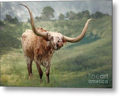 Texas Longhorn - Pride Metal Print