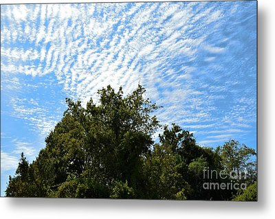 Metal Print featuring the photograph Texas Scene - Midday  by Ray Shrewsberry