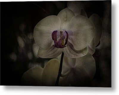 Metal Print featuring the photograph Textured Flower by Ryan Photography