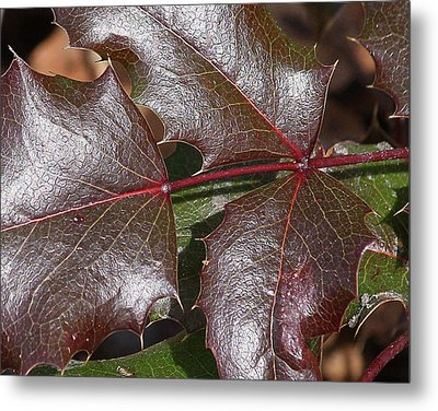 Metal Print featuring the photograph Textured Leaves by Doris Potter