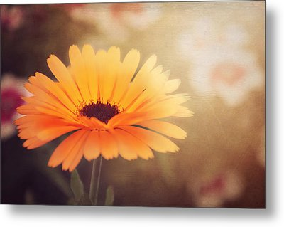 Textured Marigold Metal Print by Carol Japp