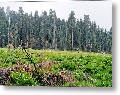 Metal Print featuring the photograph Tharps Log Meadow by Kyle Hanson