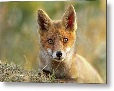 That Face - Cute Fox Kit Metal Print by Roeselien Raimond