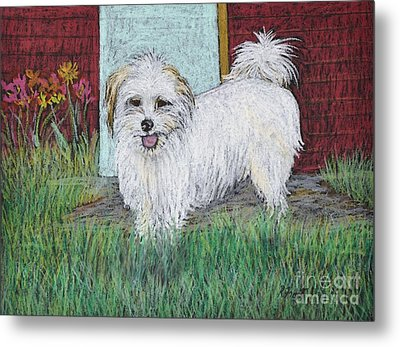 That Little White Dog Metal Print by Reb Frost