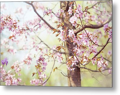 Metal Print featuring the photograph That Tender Joyful Spring by Jenny Rainbow