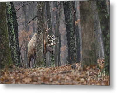 Metal Print featuring the photograph That's The Spot by Andrea Silies