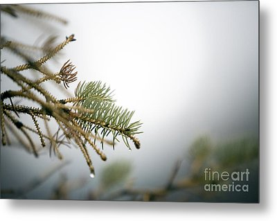 Thaw Metal Print by Jeannie Burleson