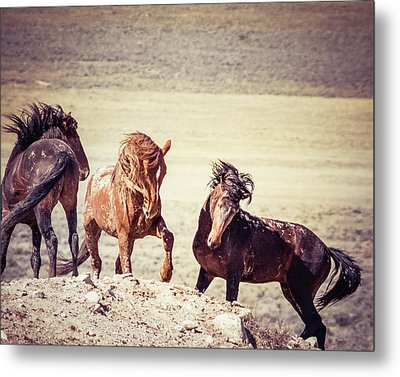 Metal Print featuring the photograph The 3 Amigos by Mary Hone