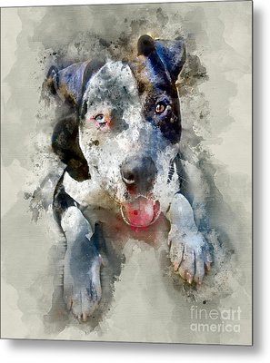 The American Pitbull Metal Print by Jon Neidert