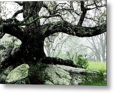 The Ancient One Metal Print by Angela Davies