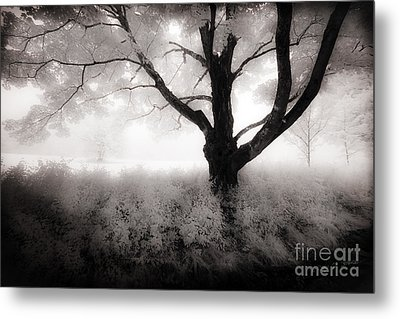 Metal Print featuring the photograph The Ancient Tree by Craig J Satterlee