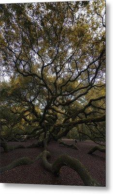 The Angel Oak Tree Metal Print by Rick Berk