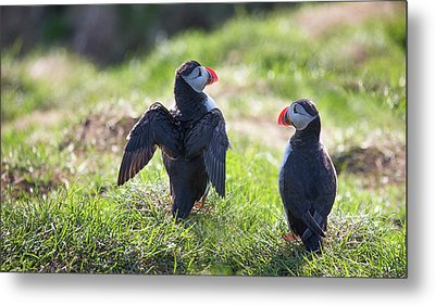 The Angel Puffin Metal Print