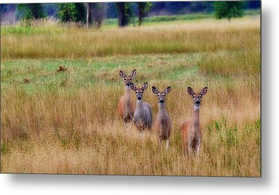 The Audience Metal Print by Annie Pflueger