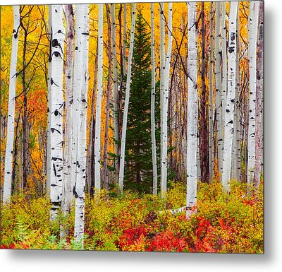 The Autumn Forest Metal Print