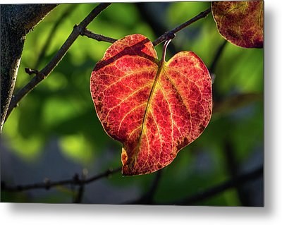 Metal Print featuring the photograph The Autumn Heart by Bill Pevlor