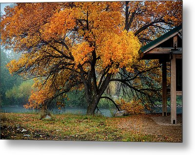 The Autumn Tree Metal Print by TL Mair