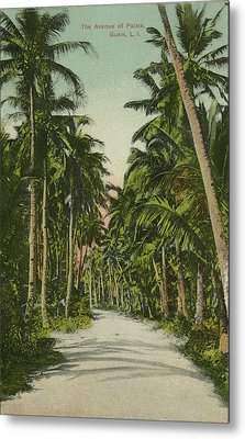 Metal Print featuring the photograph The Avenue Of Palms Guam Li by eGuam Photo