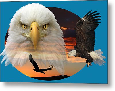 Metal Print featuring the photograph The Bald Eagle 2 by Shane Bechler