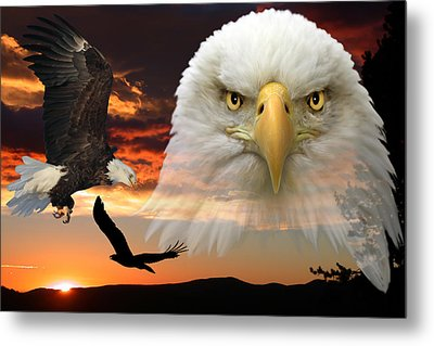 Metal Print featuring the photograph The Bald Eagle by Shane Bechler