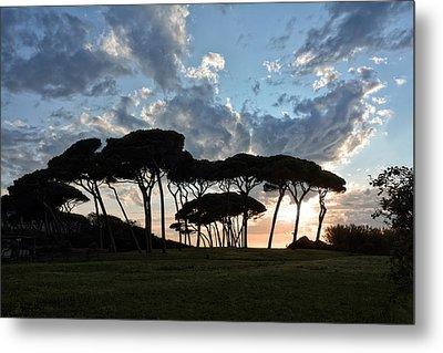 The Baratti Pine Trees Metal Print by Joachim G Pinkawa