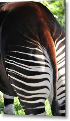 The Beautiful Okapi 03 Metal Print