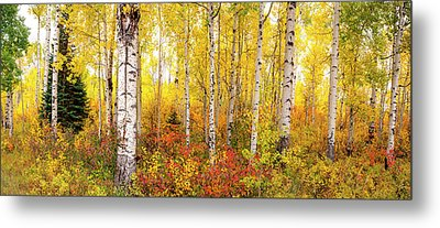 Metal Print featuring the photograph The Beauty Of The Autumn Forest by Tim Reaves
