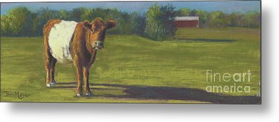 The Belted Cow Metal Print by Terri  Meyer