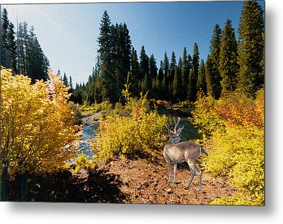 The Bend Of The Rogue River Metal Print by Diane Schuster