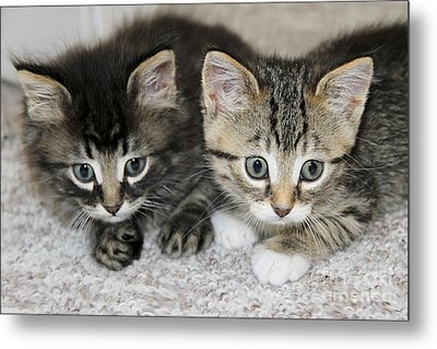 The Best Buddies Metal Print by Teresa Zieba