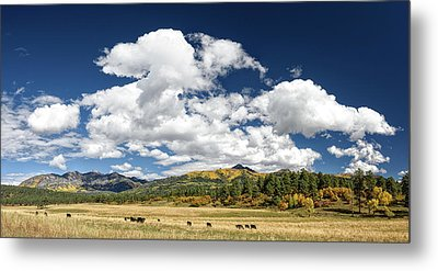 The Big Picture Metal Print by Cathy Neth