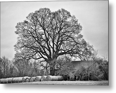 Metal Print featuring the photograph The Big Tree by Ron Dubin