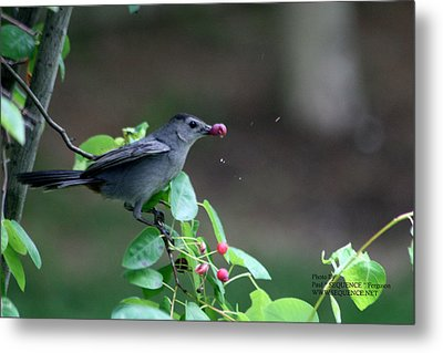 Metal Print featuring the photograph The Bird  by Paul SEQUENCE Ferguson             sequence dot net