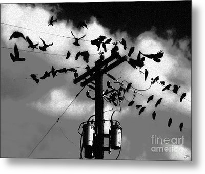 The Birds Metal Print by David Lee Thompson