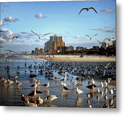 Metal Print featuring the photograph The Birds by Jim Hill