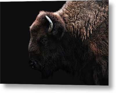 The Bison Metal Print by Joachim G Pinkawa