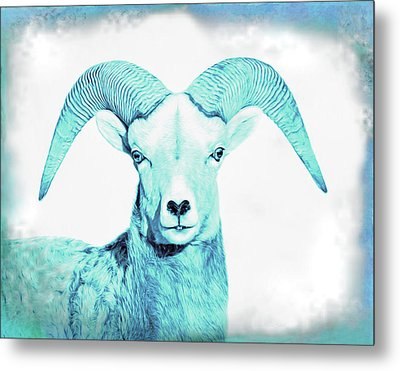 Metal Print featuring the photograph The Blue Ram by Jennie Marie Schell