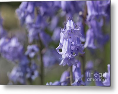 The Bluebell Patch Metal Print by Steve Purnell