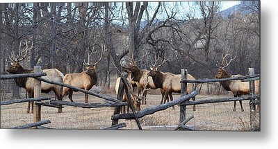 The Boys Metal Print by Billie Colson