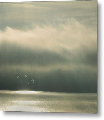 The Bright Spot Metal Print by Sally Banfill