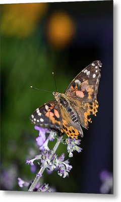 Metal Print featuring the photograph The Butterfly Effect by Alex Lapidus