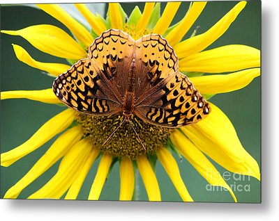 The Butterfly Effect Metal Print by Tina  LeCour