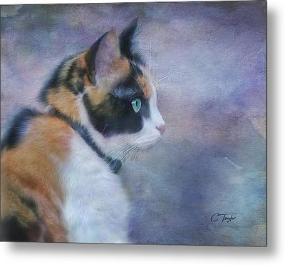 Metal Print featuring the digital art The Calico Staredown  by Colleen Taylor