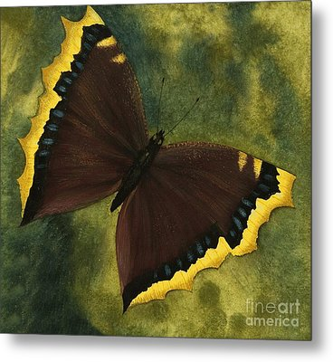 The Camberwell Beauty Or The Mourning Cloak Metal Print