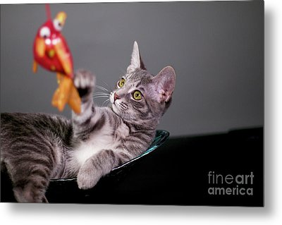 The Cat And The Fish Metal Print