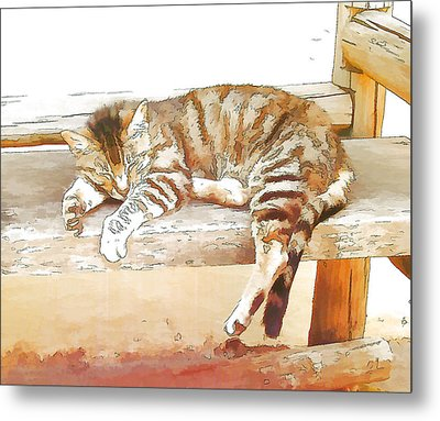 The Cat Is Back Metal Print by Jan Hattingh